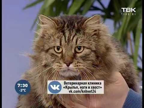 Вопрос: Может ли рвать кота от того, что он хочет кошку?