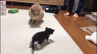 保護された子猫を見たときの猫の反応がかわいい