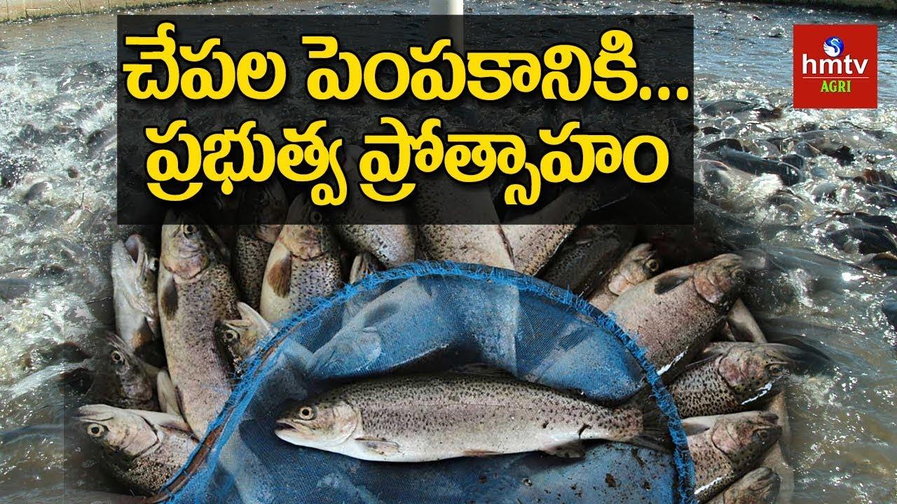 Subsidies for Fish Farming | hmtv Agri