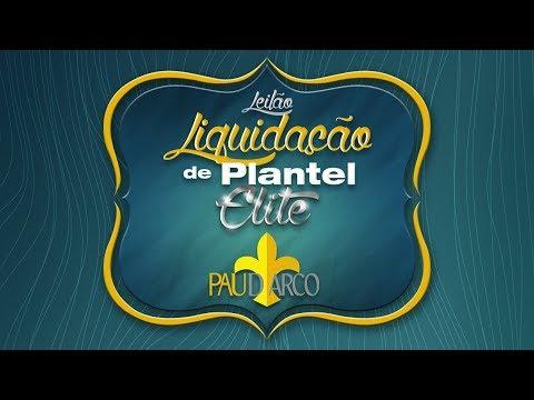 Lote 07 (Planicie FIV da Pau D'arco - NON 6702)