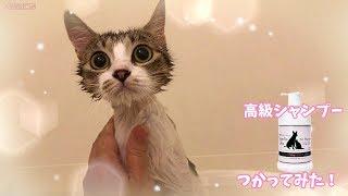 プロポリスワン・ペット用シャンプー(天然成分)おすすめ! → https://...