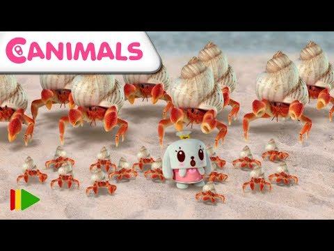 Canimals   Épisode 25 et 26   Dessins pour enfants   11 minutes