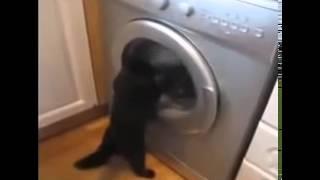 Кот и стиральная машина! Контроль за стиркой!