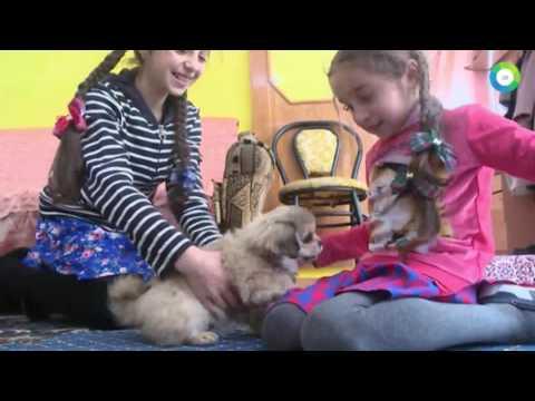 Роскошная жизнь молдавских