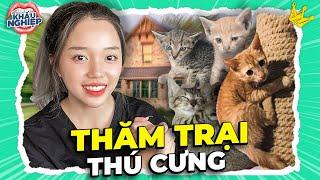 Bật mí dự án đặc biệt và lý do Linh nhận nuôi thêm thú cưng | ĐŨY MÈO COLLECTION