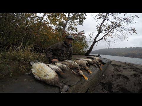 Duck Hunting Western Washington!