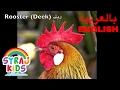 Animals | Teach Arabic | Kids الحيوانات | تعليم اللغة العربية | أطفال video