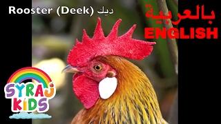 Learn Farm Animals   English & Arabic   Bilingual   حيوانات المزرعة بالعربية و الانجليزية