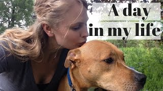 A DAY IN THE LIFE OF A DOG WALKER | InRuffCompany.com