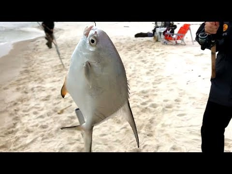We Caught 2 PERMIT From The Beach! Surf Fishing Can Be Frustrating