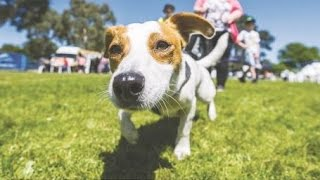 Pets Day Out : Sunday 11 October 2015