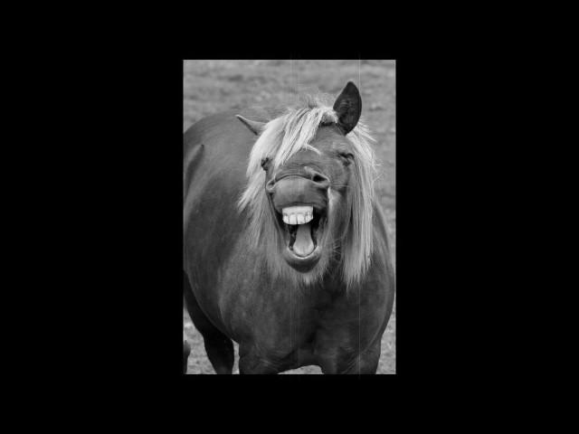Изображение предпросмотра прочтения – АделинаЗаляева представляет буктрейлер кпроизведению «Лошадиная фамилия» А.П.Чехова
