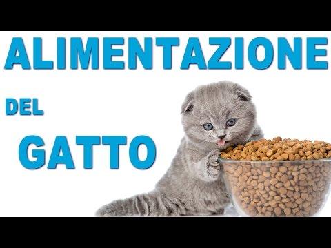 alimentazione-del-gatto---cibi-ok-e-consigli-utili