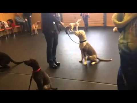 Puppy Kindergarten #1