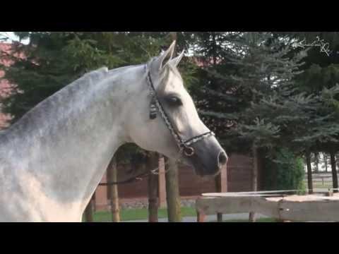 Prezentacje filmowe koni