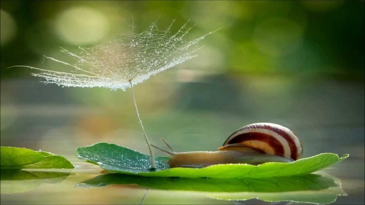 nature stunning natureza maravilhosa