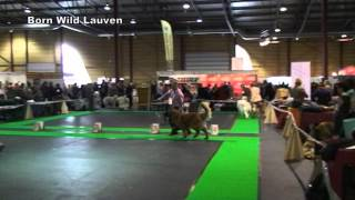 Latvian Winner Show 2013, Leonberger