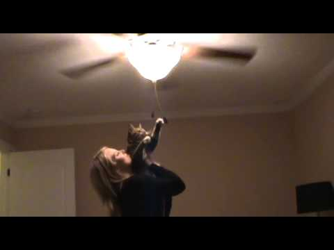 Cat Plays With Ceiling Fan Turns Off Light