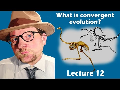 What is convergent evolution?