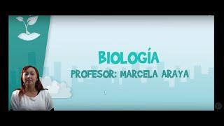 Biología - Clase Nº9 Ejercicios - Meiosis y gametogénesis