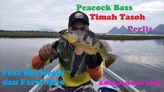 Trip Casting Peacock Bass Timah Tasoh,Perlis edisi Januari 2018