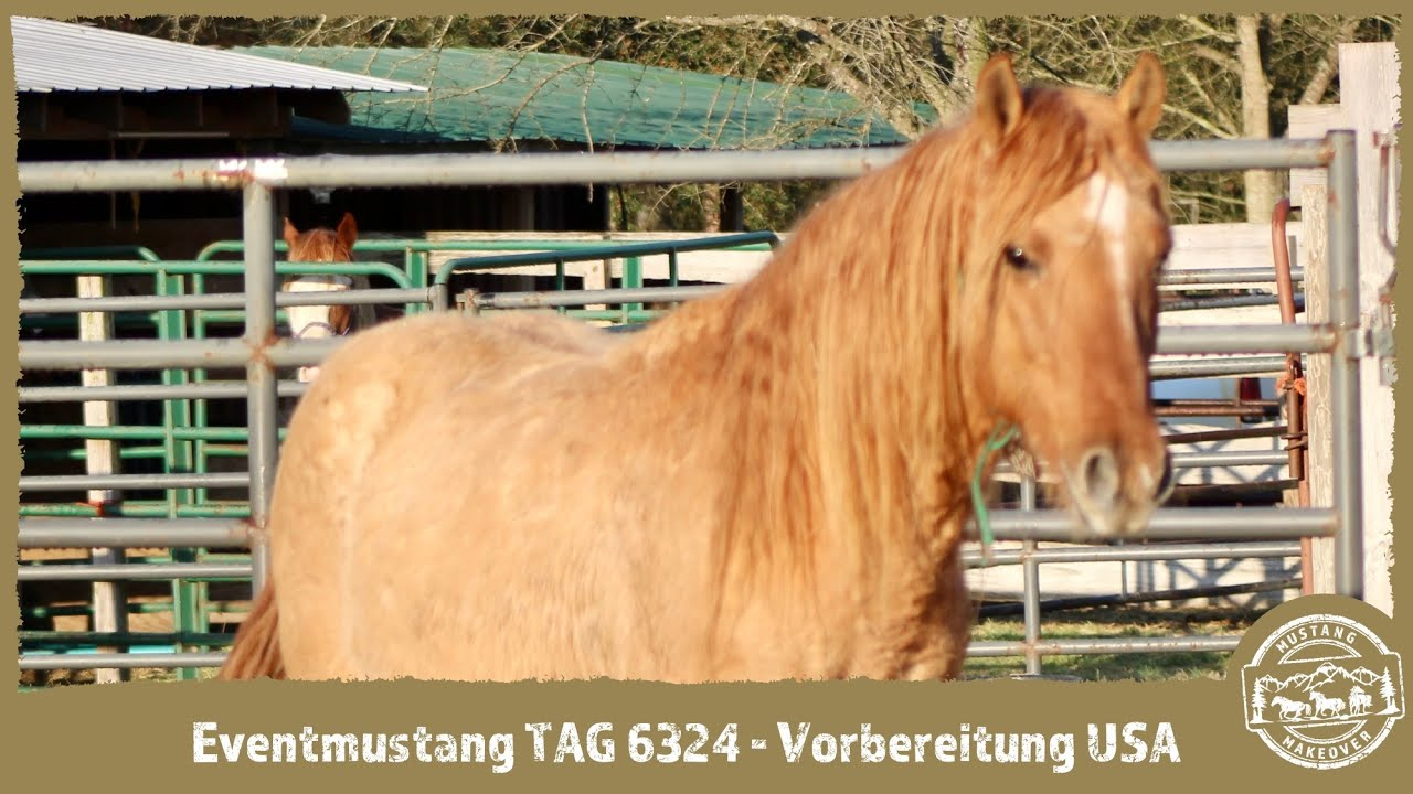 MUSTANG MAKEOVER 2021 - TAG 6324 - Vorbereitung USA