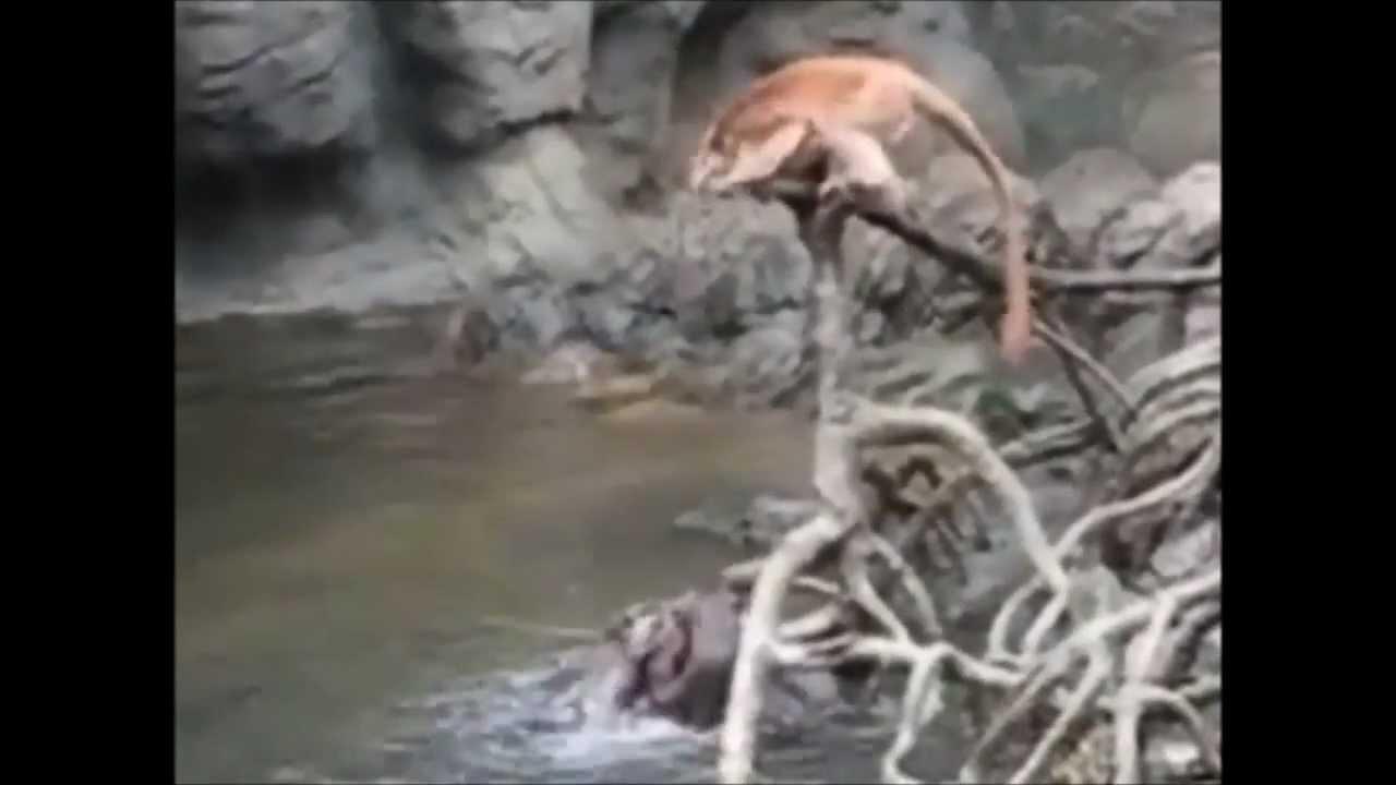 The Monkey Drowns