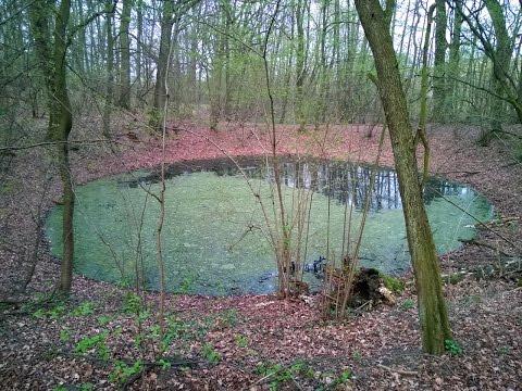 strona randkowa fish in the pond