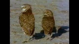 Documentary Mating In The Animal Kingdom(hayvanların çiftleşmesi Belgeseli