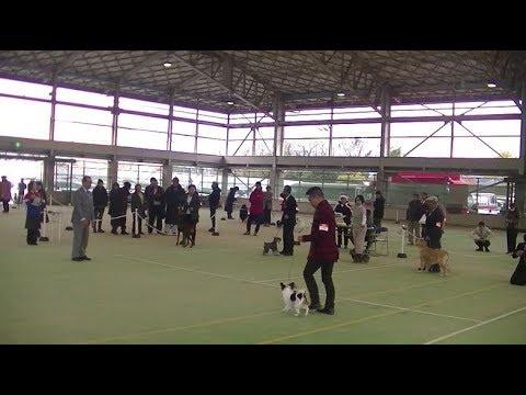 Japanese dog show in Fukuoka on 9th December 2017 b