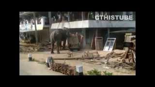 elephant gone crazy in india Kerala trashing car