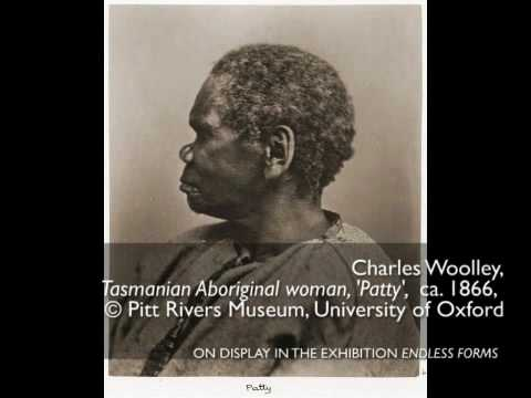 Evolving Images: Race and Popular Darwinism in Nineteenth-Century Photography