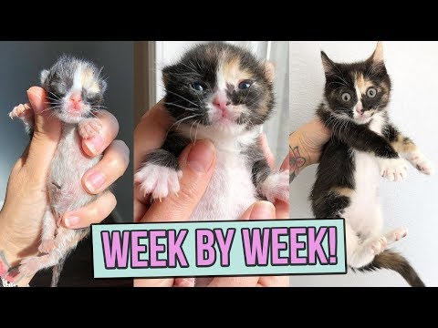 Learn How Baby Kittens Grow: 0-8 Weeks!