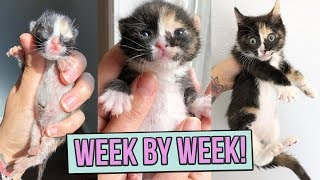 Learn How Baby Kittens Grow: 08 Weeks!