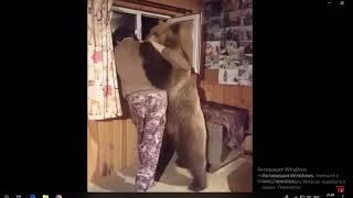 Короткий добрый клип посвящённый дружбе человека и медведя. Минутка позитива ;-)