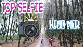 Wisata top selfie hutan pinus magelang terbaru