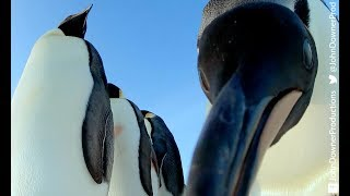 Robotic Penguin Lays EggCam & Gets A Surprising Viewpoint!