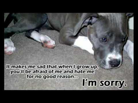 stop bsl against pitbulls bsl bull shit legislation