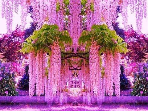 Декоративные  деревья, кустарники, лианы.  Ornamental  trees, shrubs, vines