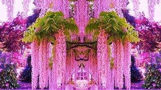 видео Декоративные кустарники и деревья для сада