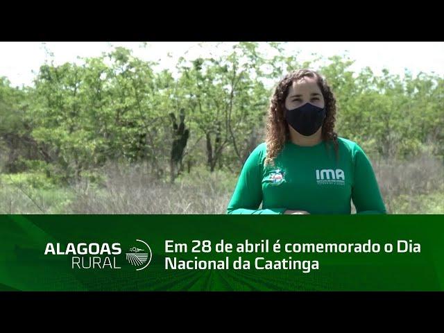 Em 28 de abril é comemorado o Dia Nacional da Caatinga