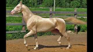 Most Beautiful Horses In The World
