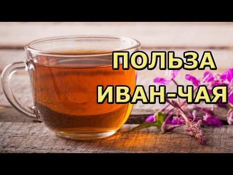 Польза и вред иван-чая (кипрея) для здоровья. Почему стоит им заменить черный чай?