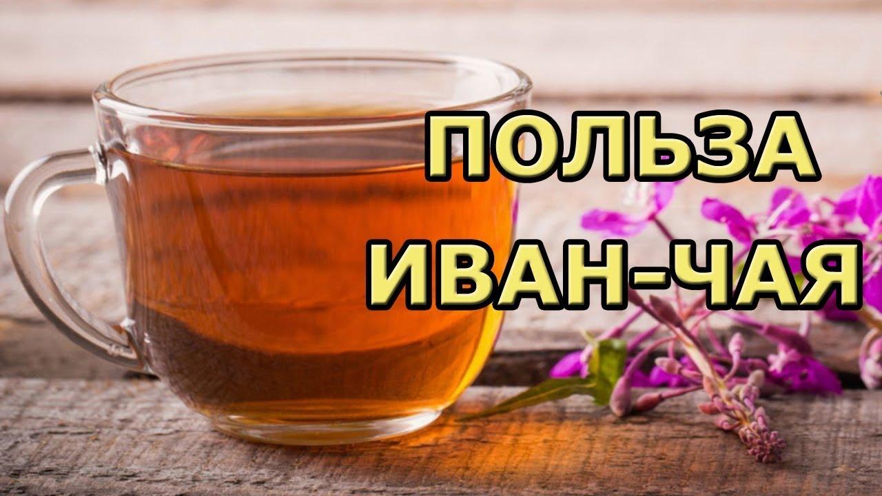 Иван-чай (кипрей) — полезные свойства и применение