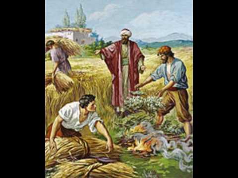 Sermon - Matthew 13: 24-30