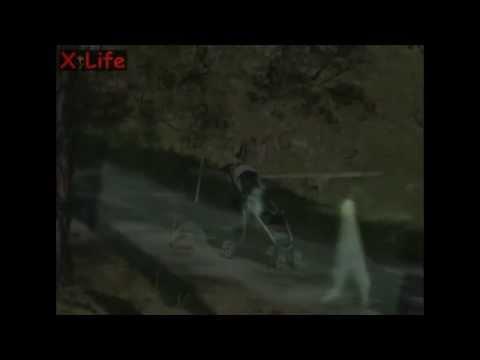Strange_Alien_Stick_like_creatures ( Nightcrawler) Fresno_in_Yosemite-3 Videos Collection.flv
