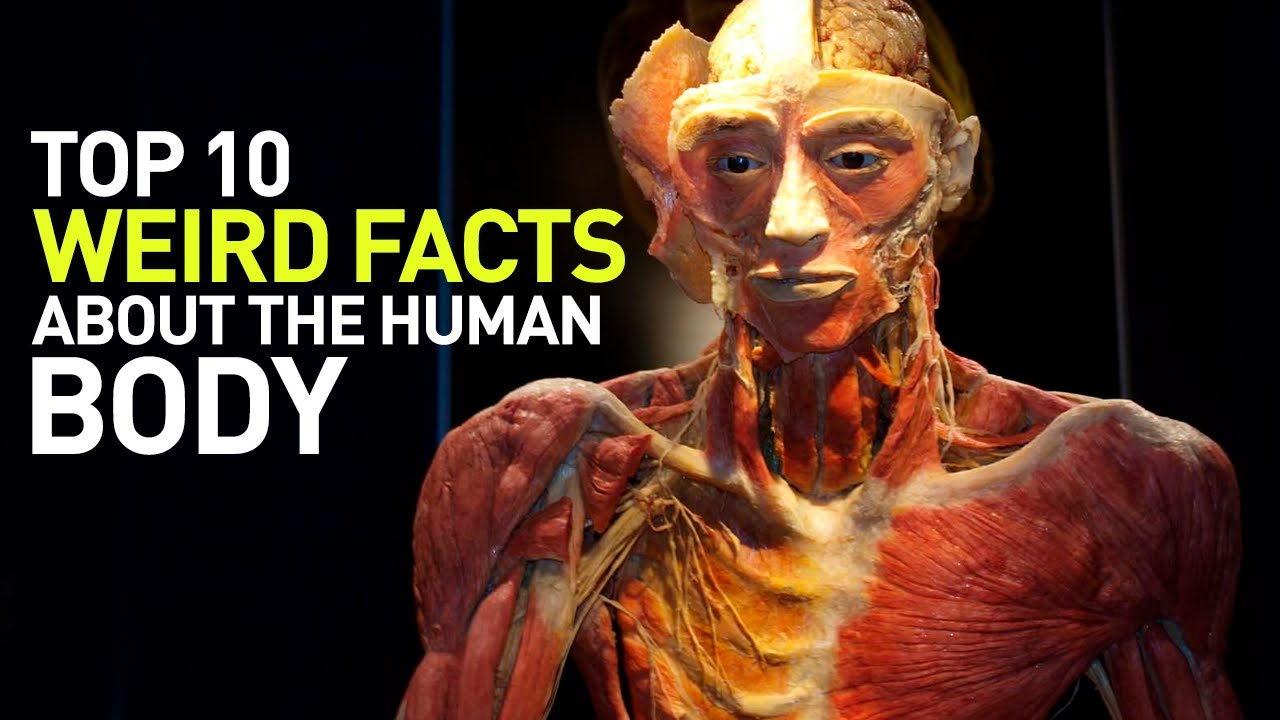 Top 10 Weird Facts About the Human Body - YouTube