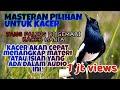 Masteran Kacer Full Isian Tengkek Buto Cililin Gereja Tarung Kapas Tembak Belalang Kecek  Mp3 - Mp4 Download
