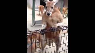 東山動物園にて。偶然、飼育員さんがエサをあげているところに遭遇しま...