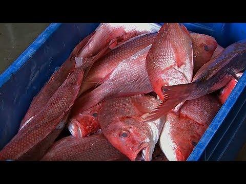 Tarpon Dock Seafood Market - Dining Tip